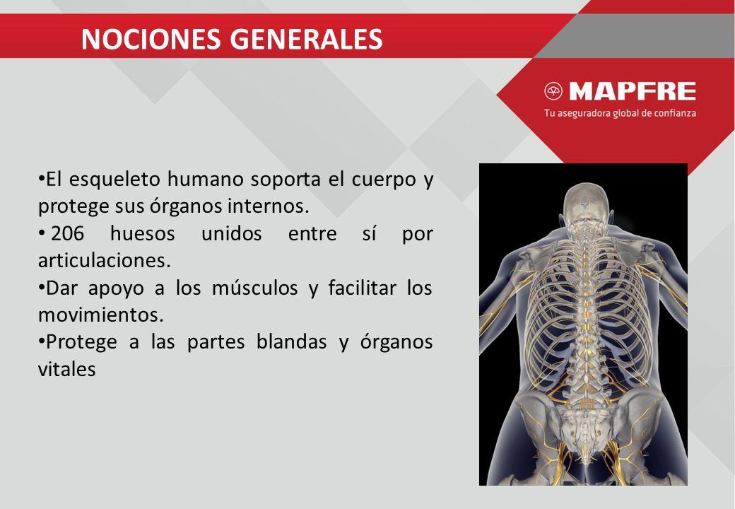 Ergonomia en Oficina Dra. Lissette Jiménez NOCIONES GENERALES El ...