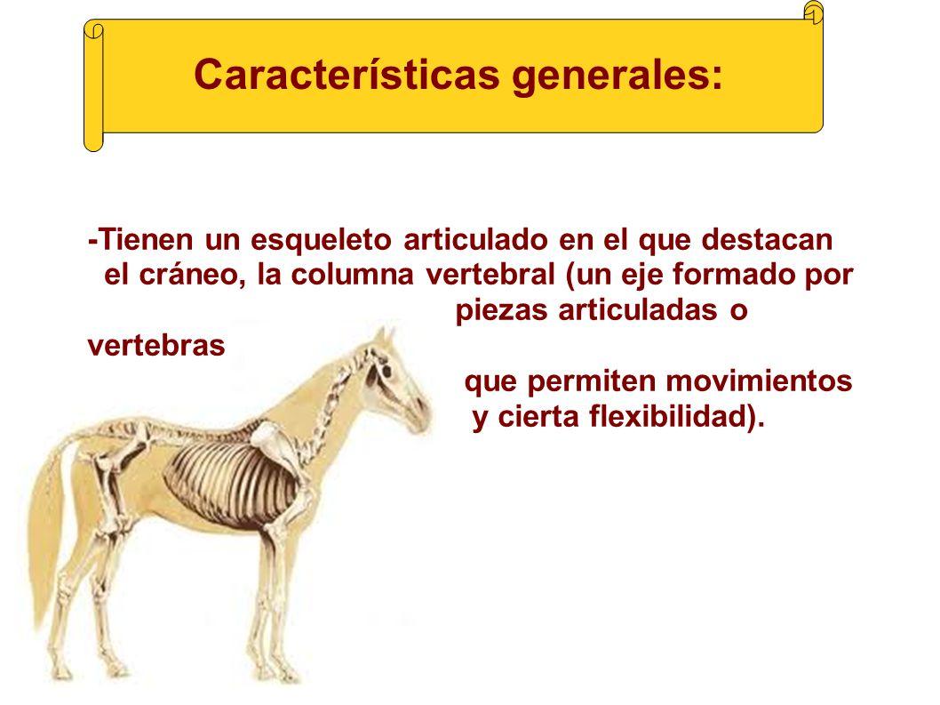 LOS ANIMALES VERTEBRADOS. ¿Qué son los animales vertebrados? - Los ...