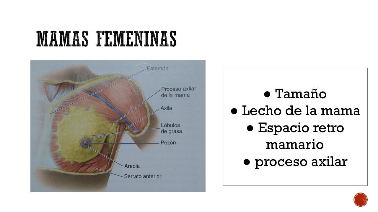 Thalia Macías Zambrano # Anatomía MEDICINA. - ppt descargar