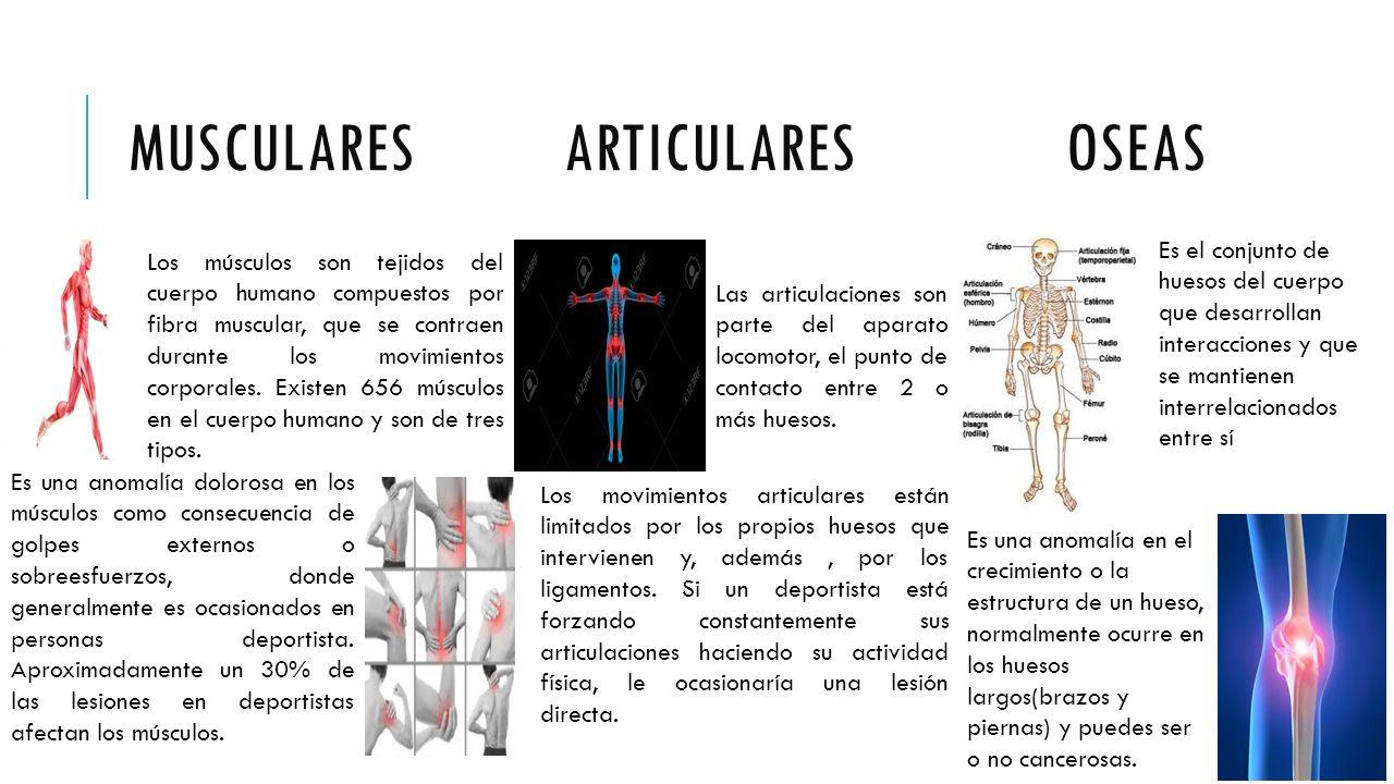 LESIONES DEPORTIVAS. MUSCULARES ARTICULARES OSEAS Los músculos son ...