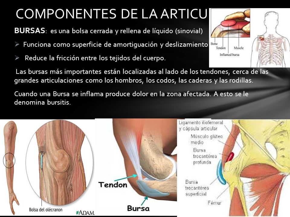 Excepcional Olécranon Bursa Anatomía Elaboración - Anatomía de Las ...