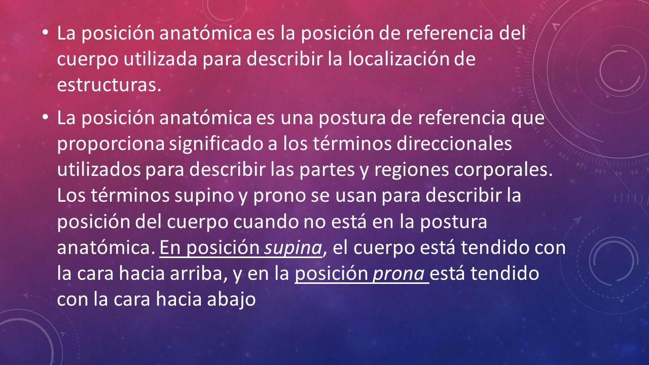 Hermosa Anatomía Actividad Términos Direccionales Bandera - Imágenes ...