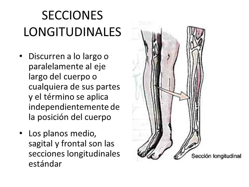 Moderno Sección De La Anatomía Longitudinal Ideas - Anatomía de Las ...