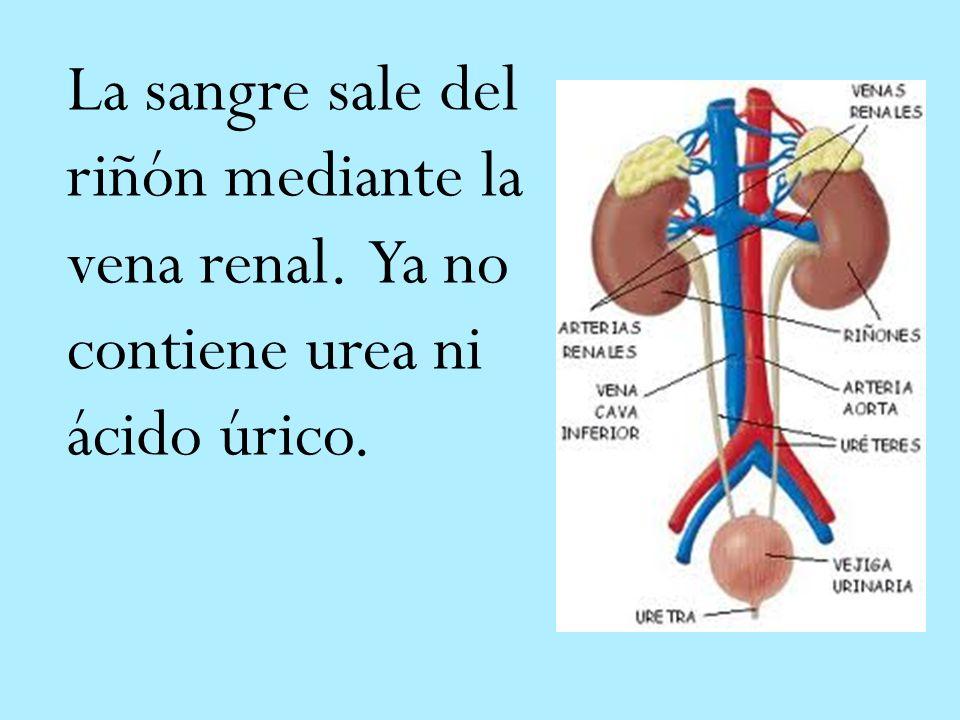 acido urico valor normal en orina acido urico e vino que remedio casero puedo tomar para el acido urico