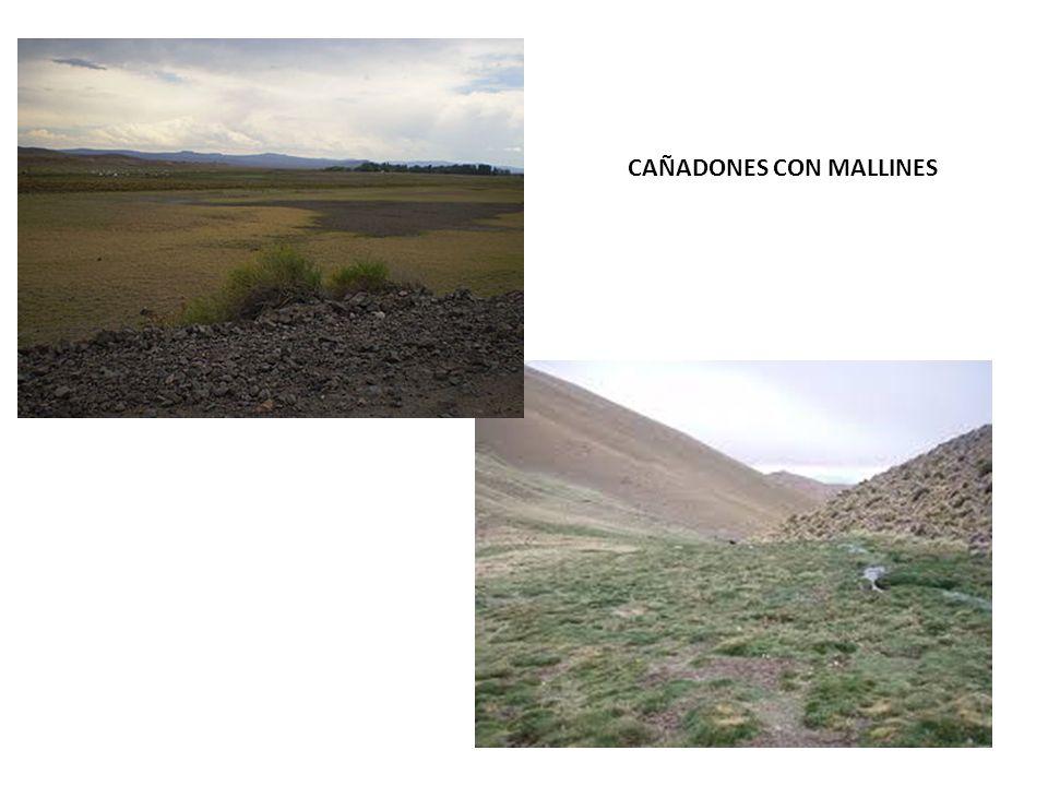 CAÑADONES CON MALLINES