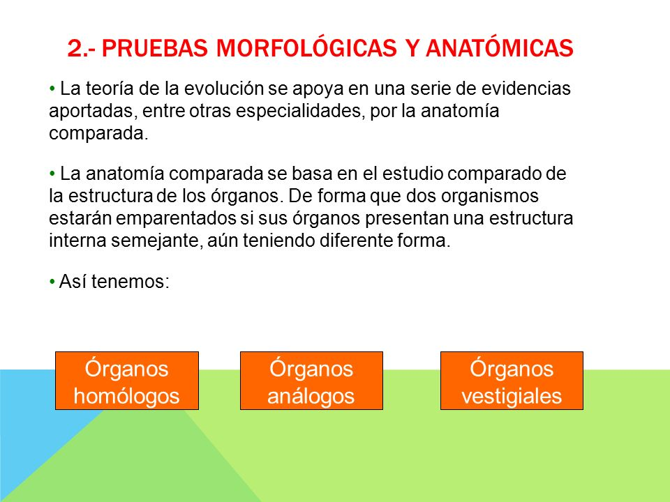 Lujoso Cómo Apoya La Anatomía Comparada De La Teoría De La Evolución ...