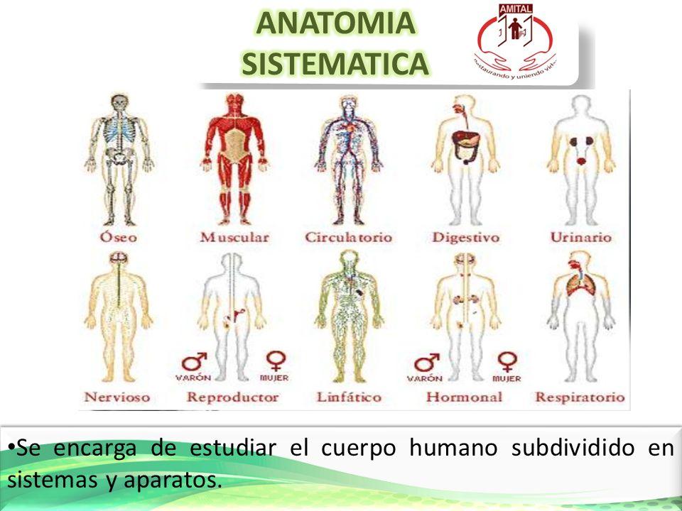 Encantador La Forma De Estudiar La Anatomía Humana Ilustración ...