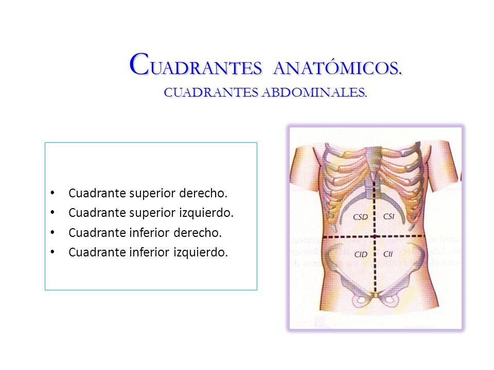 Lujo Anatomía Cuadrante Abdominal Elaboración - Imágenes de Anatomía ...