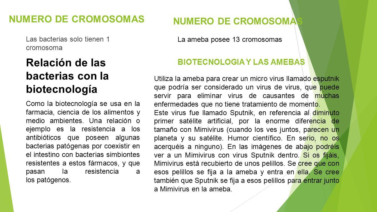 Contemporáneo Número De Cromosomas Hoja De Trabajo Modelo - hojas ...
