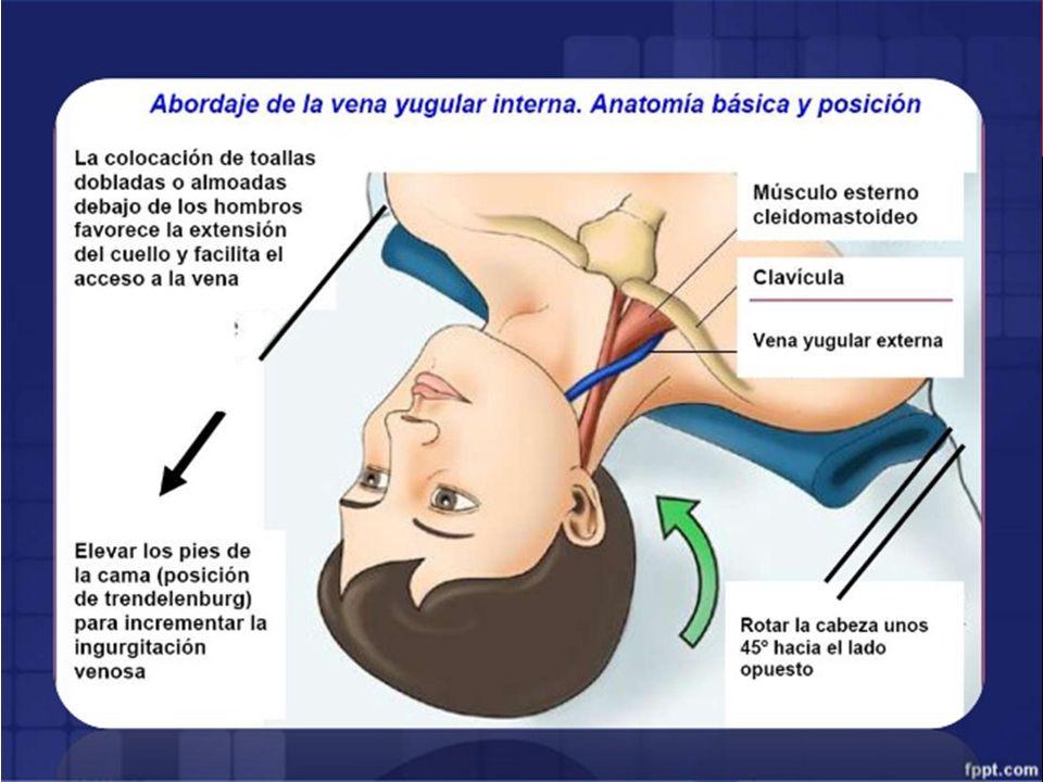 Encantador Línea Central De La Anatomía Colocación Elaboración ...