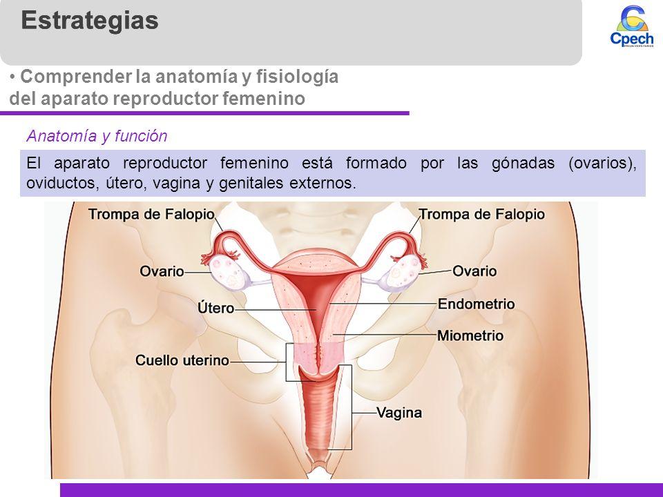 Contemporáneo Cuello Del útero Anatomía Femenina Imágenes - Anatomía ...