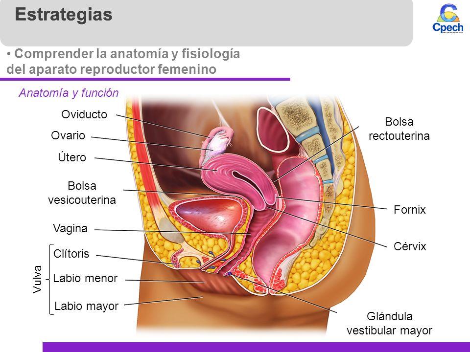 Increíble Anatomía Vigina Patrón - Anatomía de Las Imágenesdel ...