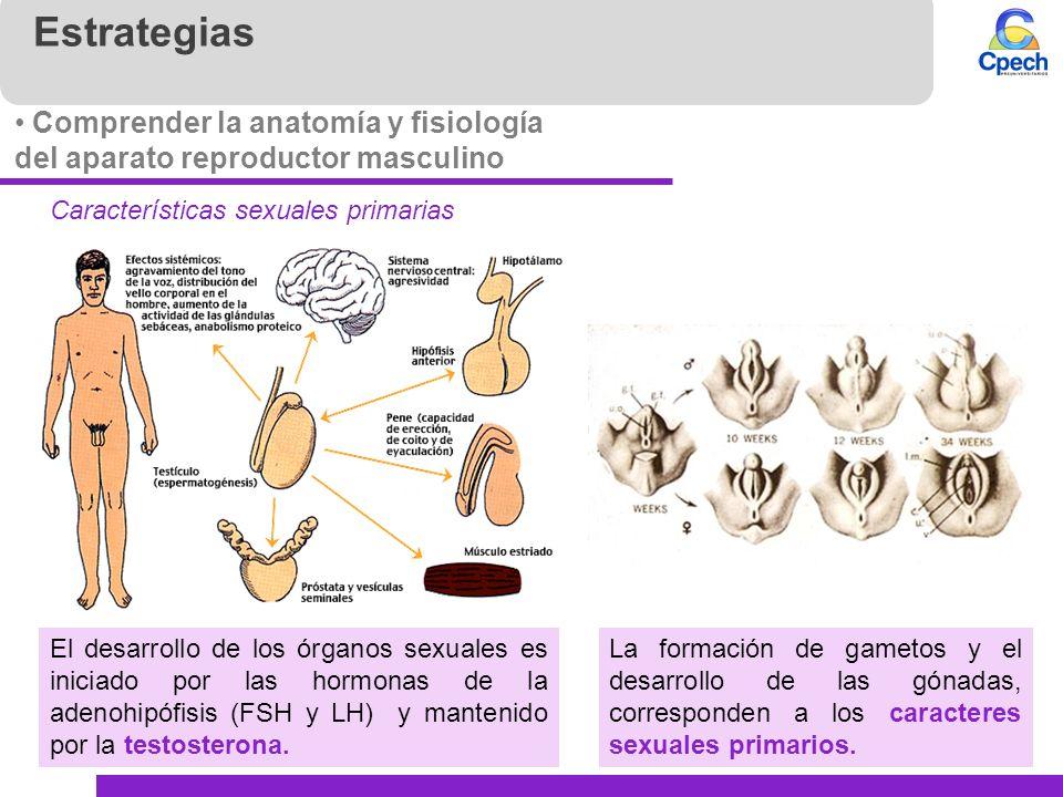 Famoso Anatomía Fisiología Masculina Modelo - Anatomía de Las ...
