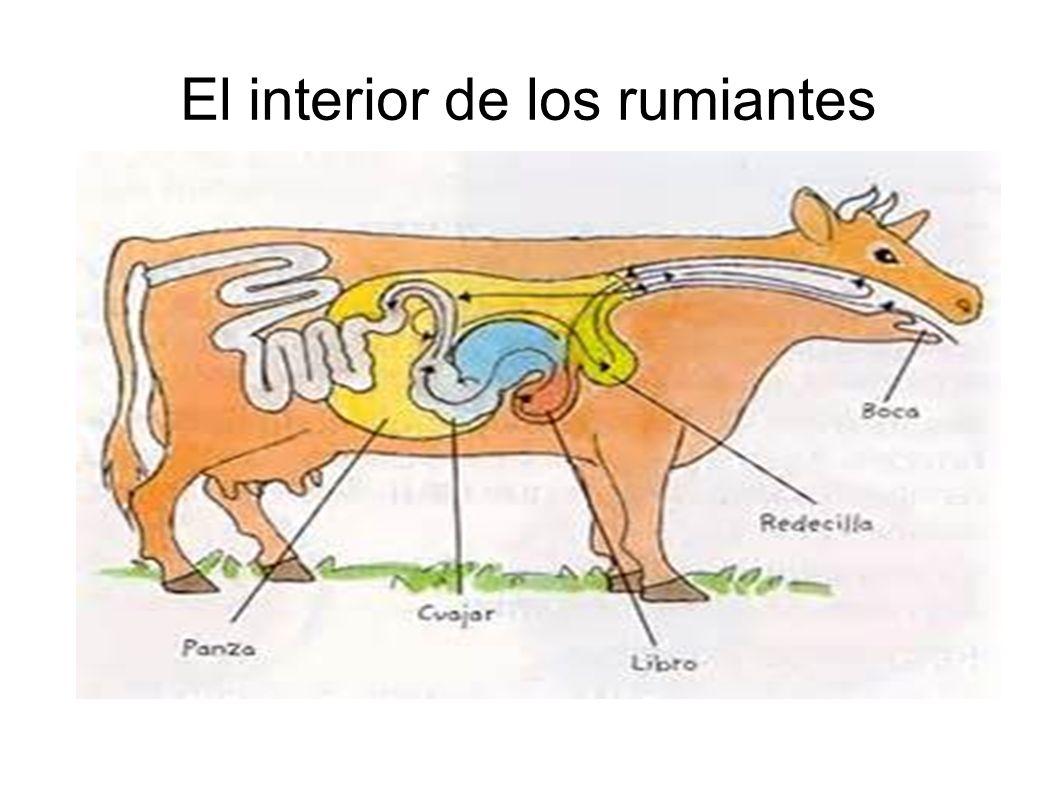 ANIMALES VERTEBRADOS ○ CARACTERÍSTICAS: ○ -poseen esqueleto ...
