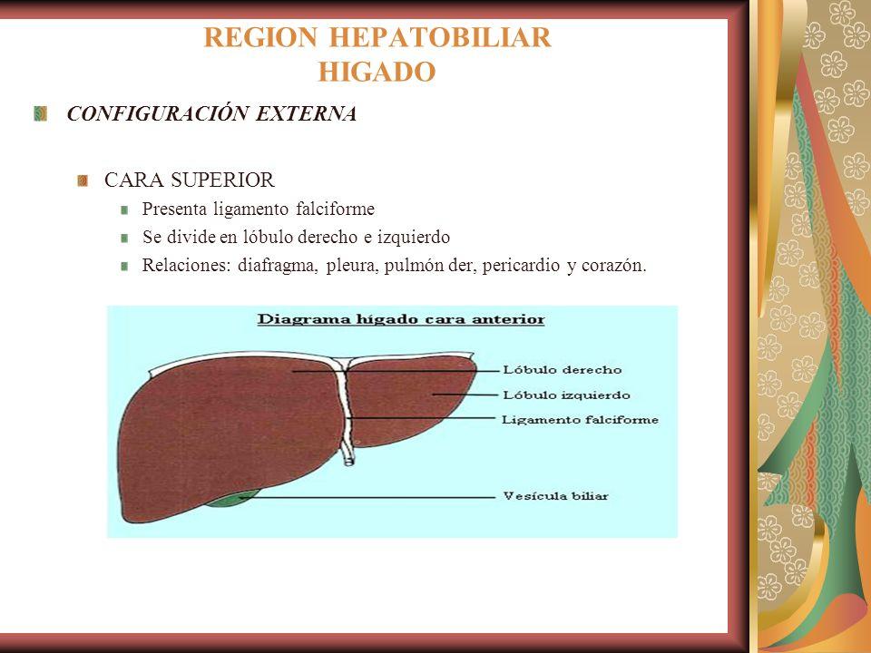REGION HEPATOBILIAR HIGADO Glándula voluminosa destinada a realizar ...