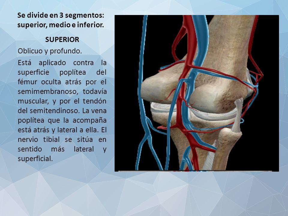 Dorable Anatomía Vena Poplítea Galería - Anatomía de Las Imágenesdel ...