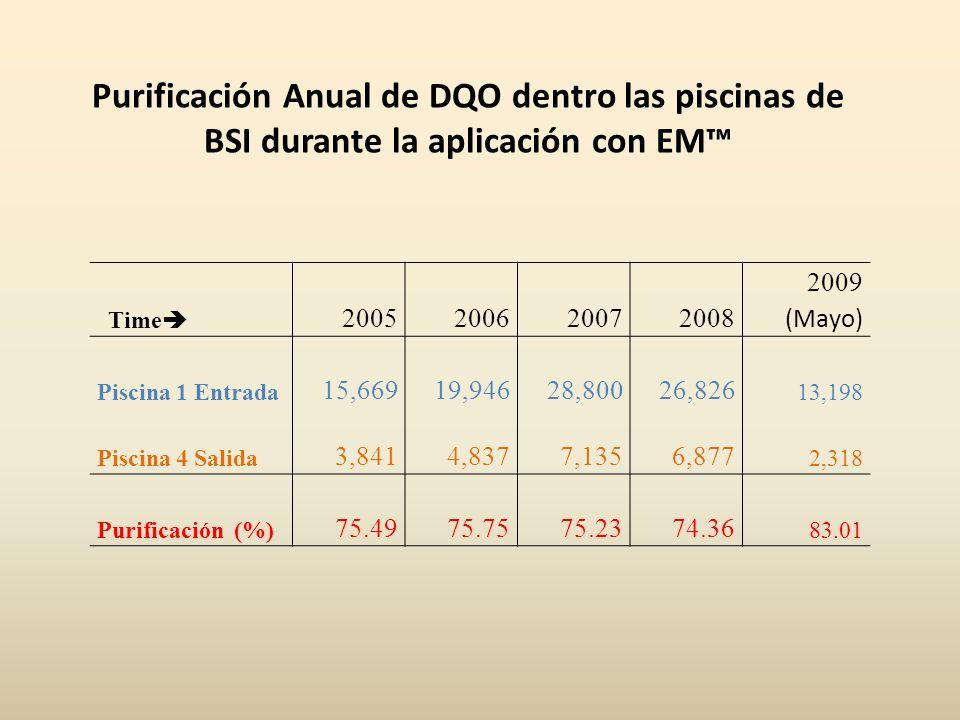 Purificación Anual de DQO dentro las piscinas de BSI durante la aplicación con EM Time 2005200620072008 2009 (Mayo) Piscina 1 Entrada 15,66919,94628,80026,826 13,198 Piscina 4 Salida 3,8414,8377,1356,877 2,318 Purificación (%) 75.4975.7575.2374.36 83.01
