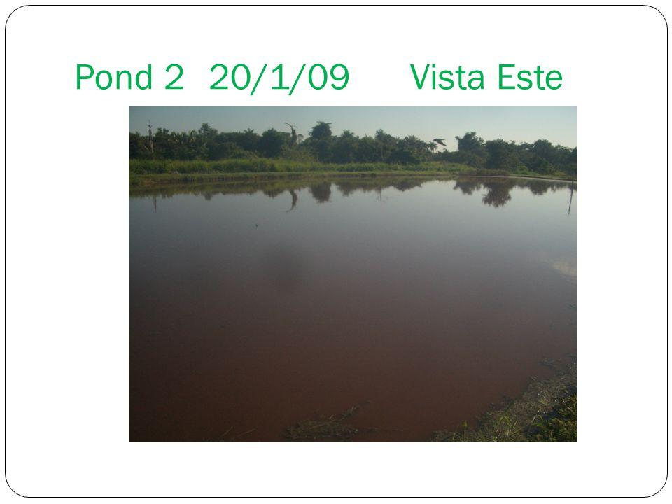 Pond 220/1/09Vista Este