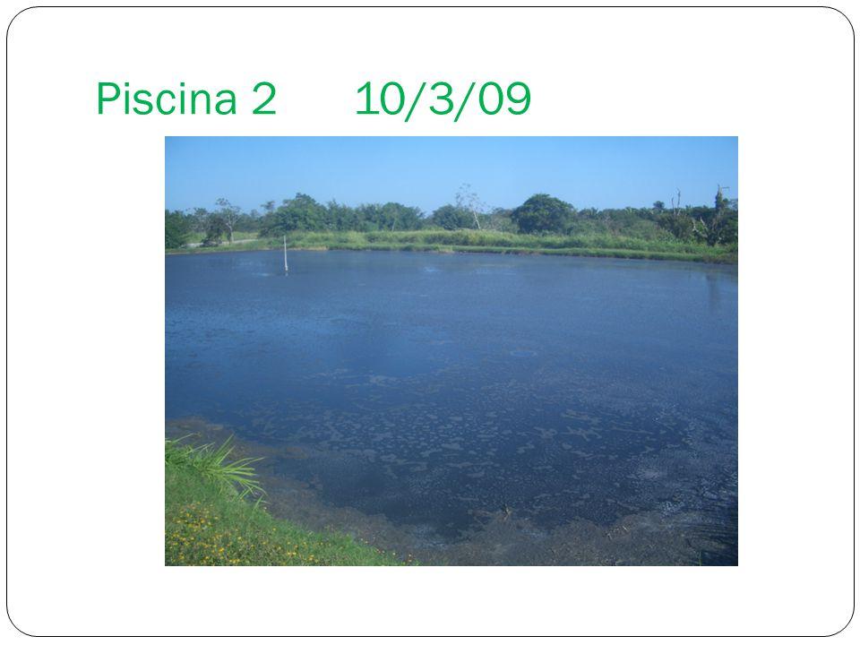 Piscina 210/3/09