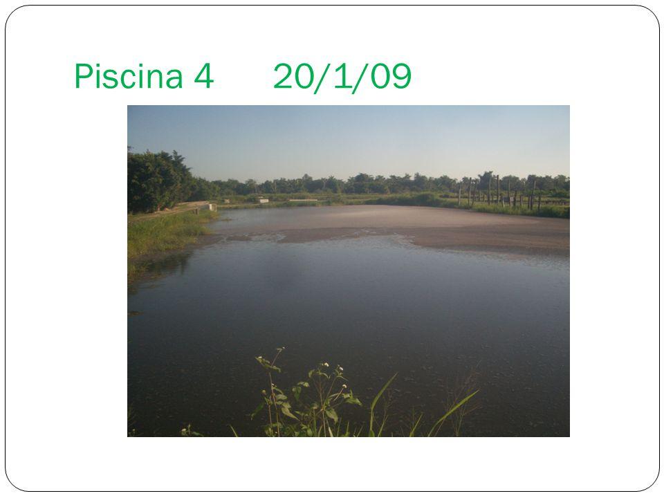 Piscina 420/1/09