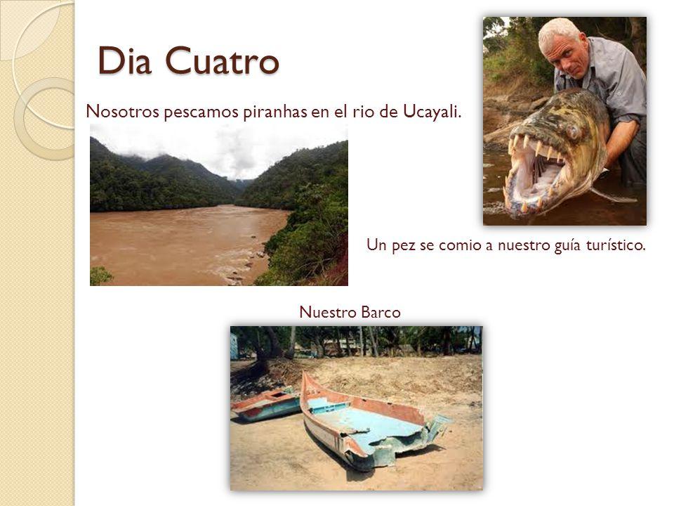 Dia Cuatro Nosotros pescamos piranhas en el rio de Ucayali. Un pez se comio a nuestro guía turístico. Nuestro Barco