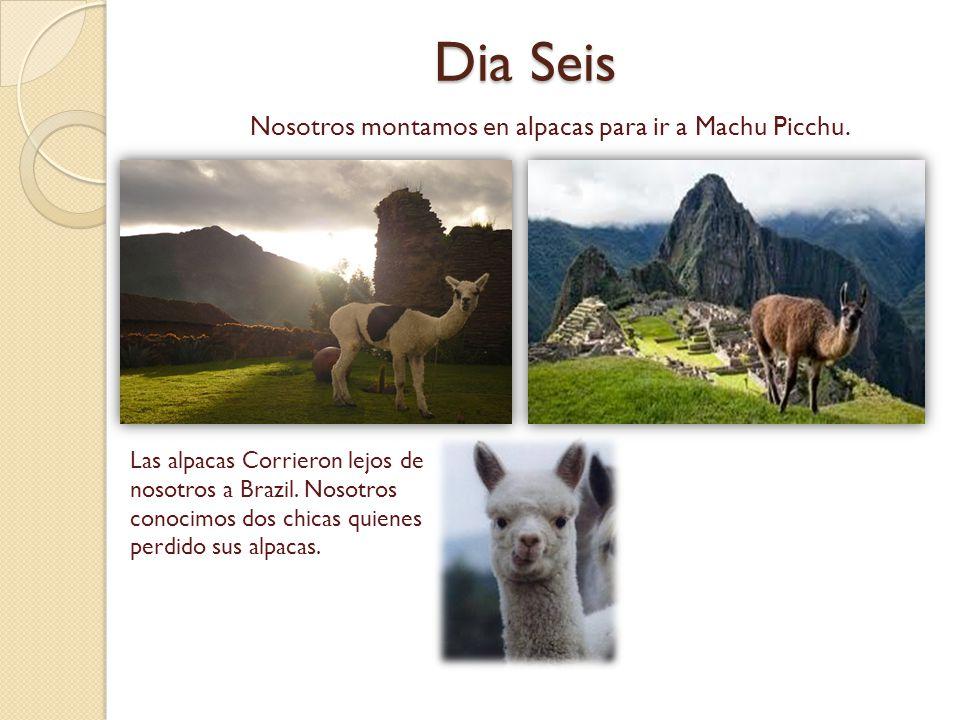 Dia Seis Nosotros montamos en alpacas para ir a Machu Picchu. Las alpacas Corrieron lejos de nosotros a Brazil. Nosotros conocimos dos chicas quienes
