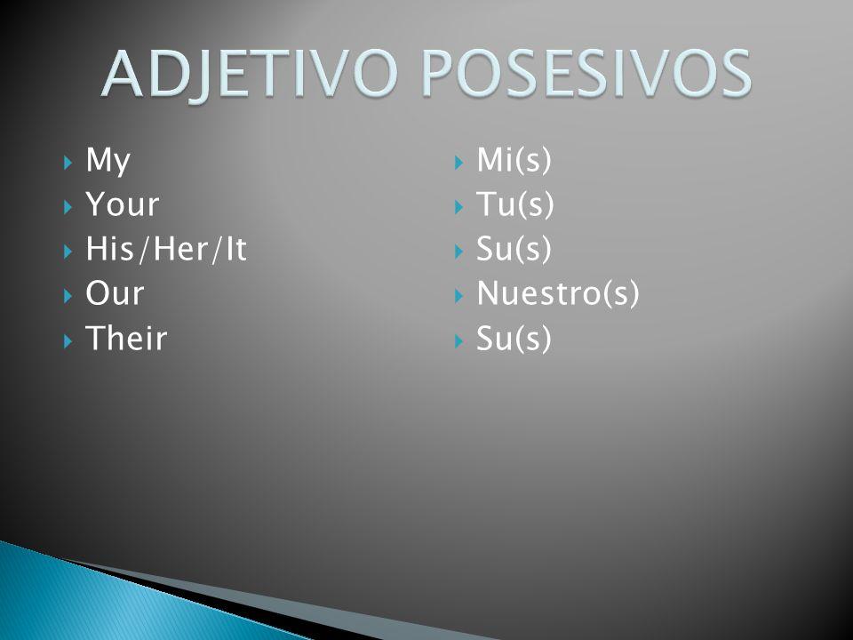 My Your His/Her/It Our Their Mi(s) Tu(s) Su(s) Nuestro(s) Su(s)
