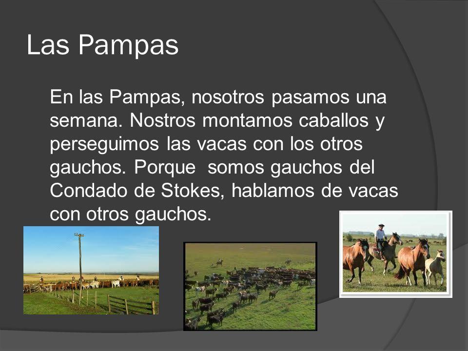Las Pampas En las Pampas, nosotros pasamos una semana. Nostros montamos caballos y perseguimos las vacas con los otros gauchos. Porque somos gauchos d