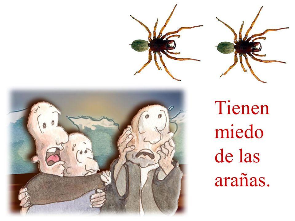 Tienen miedo de las arañas.