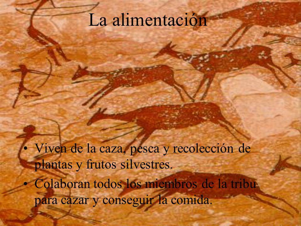 La alimentación Viven de la caza, pesca y recolección de plantas y frutos silvestres. Colaboran todos los miembros de la tribu para cazar y conseguir