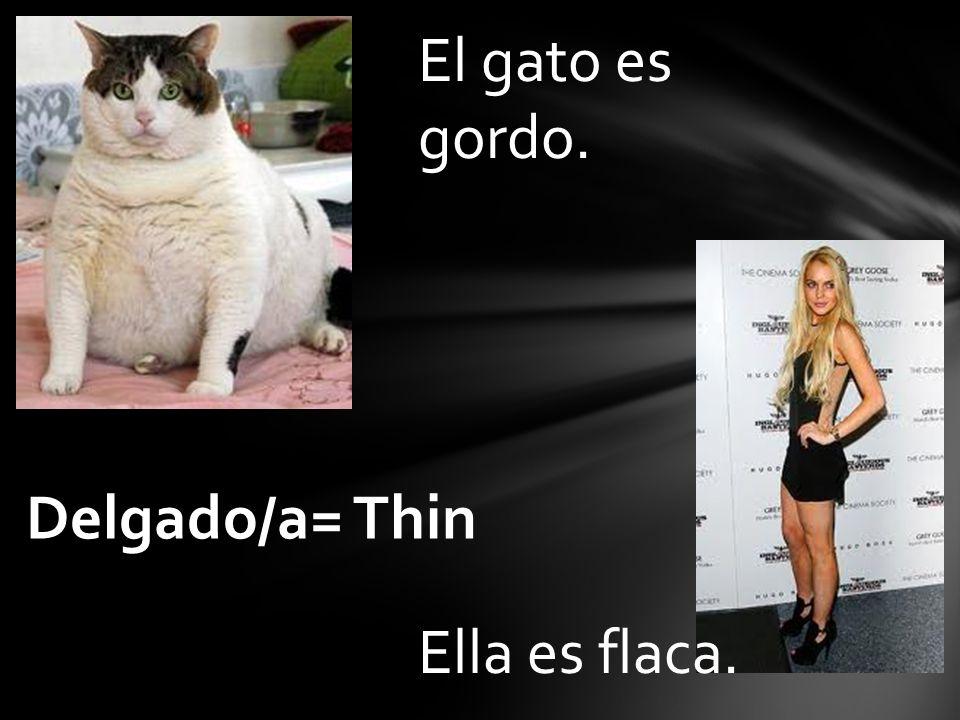 El gato es gordo. Ella es flaca. Delgado/a= Thin