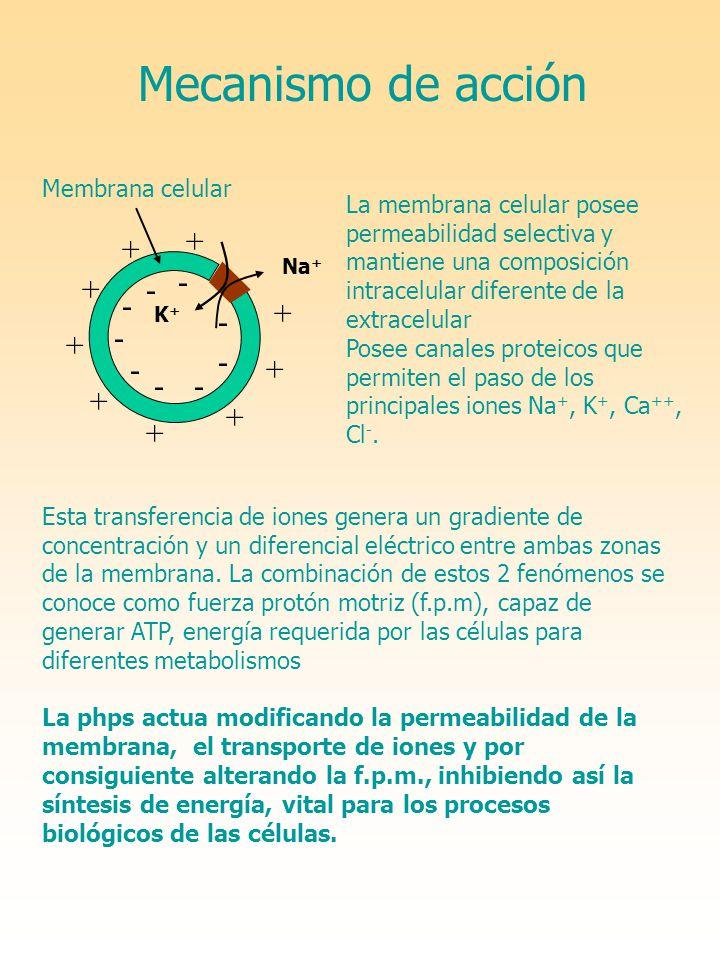 Mecanismo de acción K+K+ Na + + + + + + + + + + - - - - - - - - - La membrana celular posee permeabilidad selectiva y mantiene una composición intrace