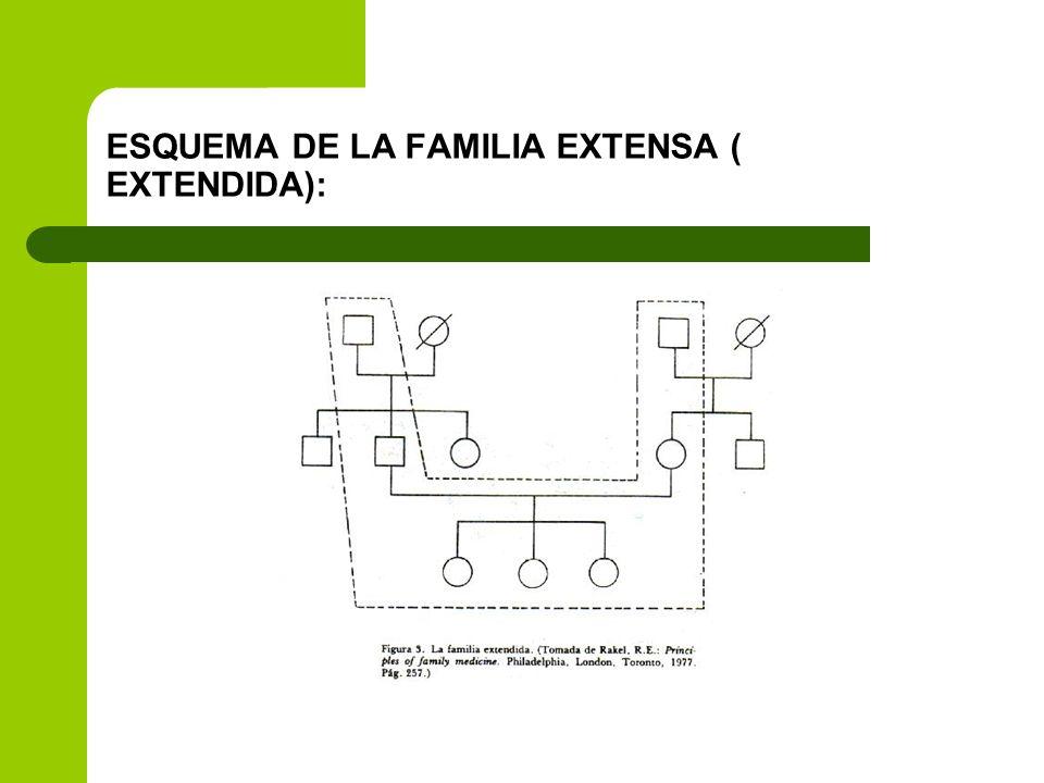 ESQUEMA DE LA FAMILIA EXTENSA ( EXTENDIDA):