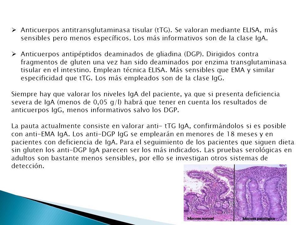 Anticuerpos antitransglutaminasa tisular (tTG). Se valoran mediante ELISA, más sensibles pero menos específicos. Los más informativos son de la clase