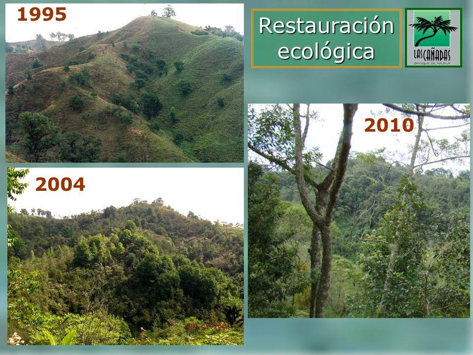 1995 2004 Restauraciónecológica 2010