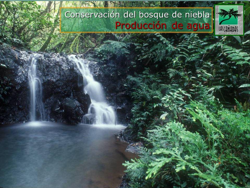 Conservación del bosque de niebla Producción de agua