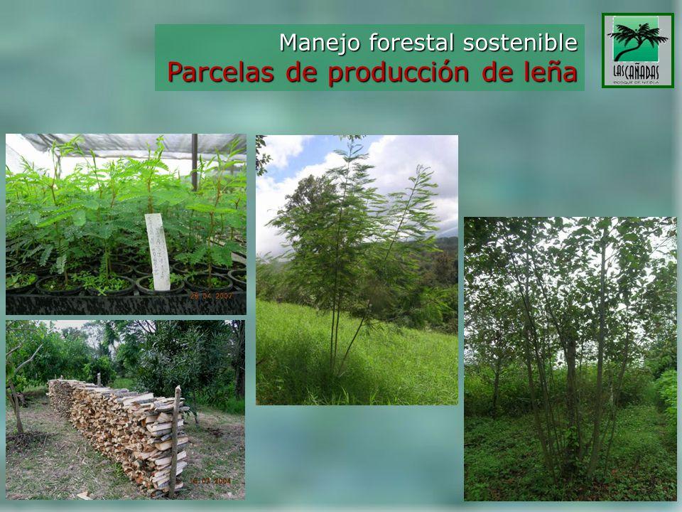Manejo forestal sostenible Parcelas de producción de leña