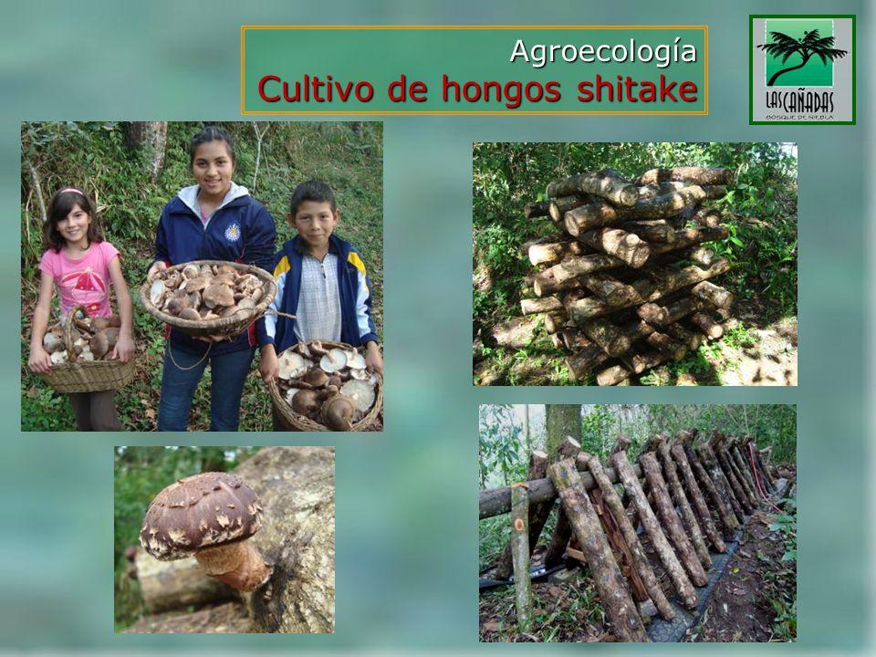 Agroecología Cultivo de hongos shitake