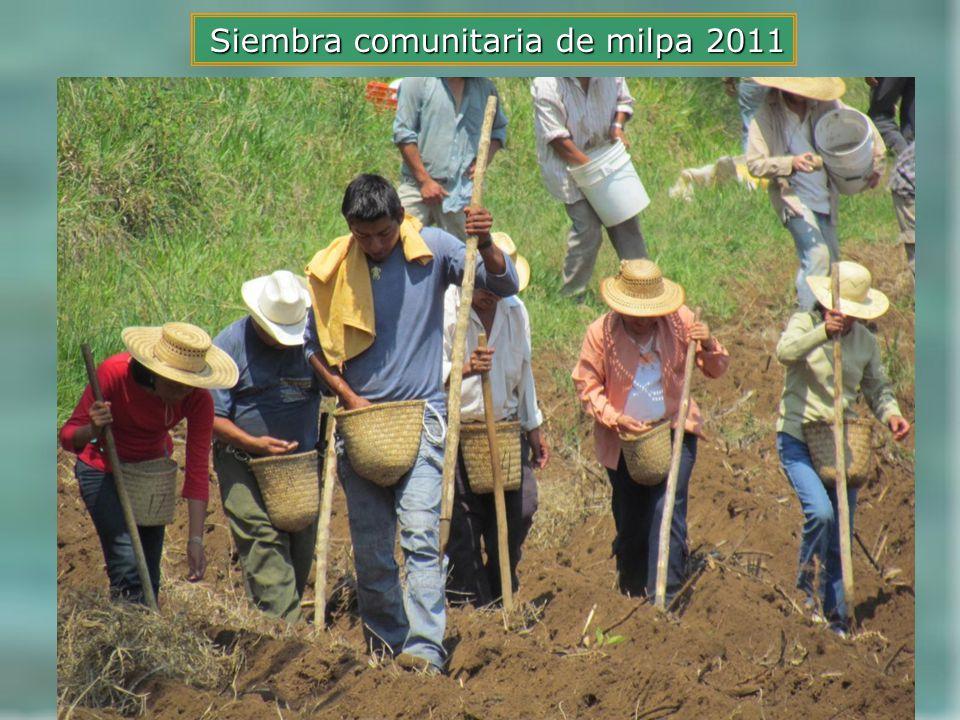 Siembra comunitaria de milpa 2011