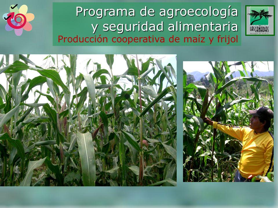 Programa de agroecología y seguridad alimentaria Producción cooperativa de maíz y frijol