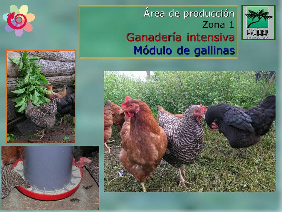 Área de producción Zona 1 Ganadería intensiva Módulo de gallinas