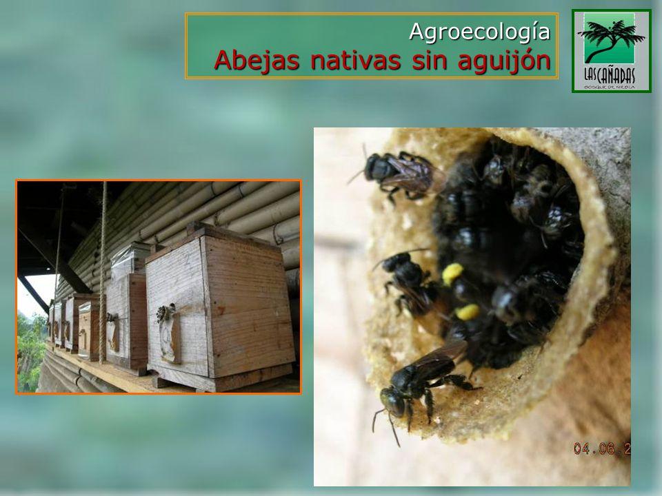 Agroecología Abejas nativas sin aguijón