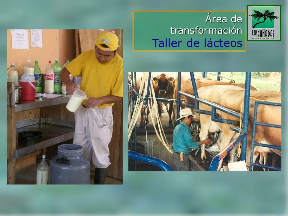Área de transformación Taller de lácteos