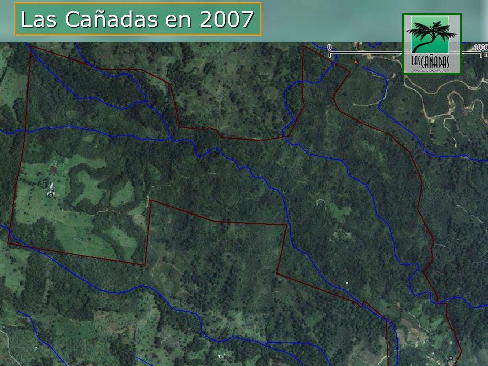 Conservación del Bosque de Niebla