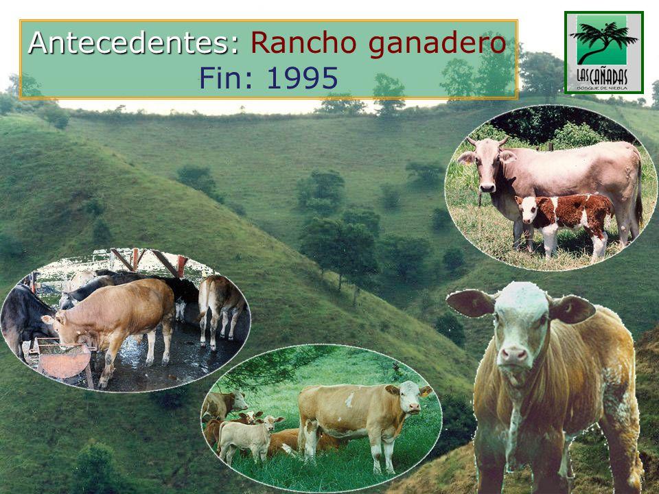 Antecedentes: Antecedentes: Rancho ganadero Fin: 1995