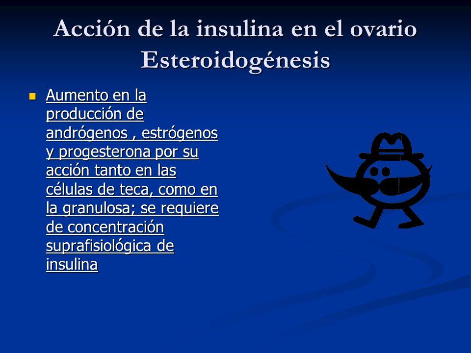 Acción de la insulina en el ovario Esteroidogénesis Aumento en la producción de andrógenos, estrógenos y progesterona por su acción tanto en las célul