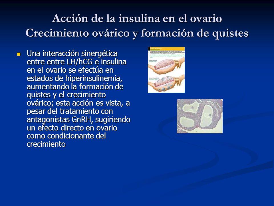 Acción de la insulina en el ovario Crecimiento ovárico y formación de quistes Una interacción sinergética entre entre LH/hCG e insulina en el ovario s