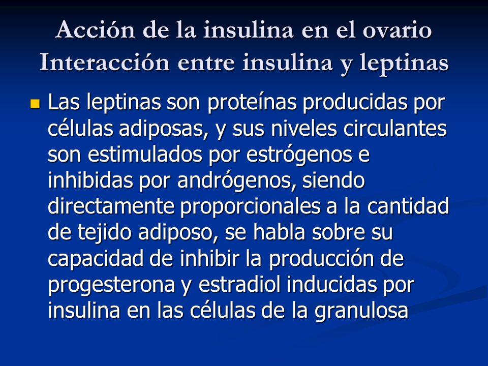 Acción de la insulina en el ovario Interacción entre insulina y leptinas Las leptinas son proteínas producidas por células adiposas, y sus niveles cir