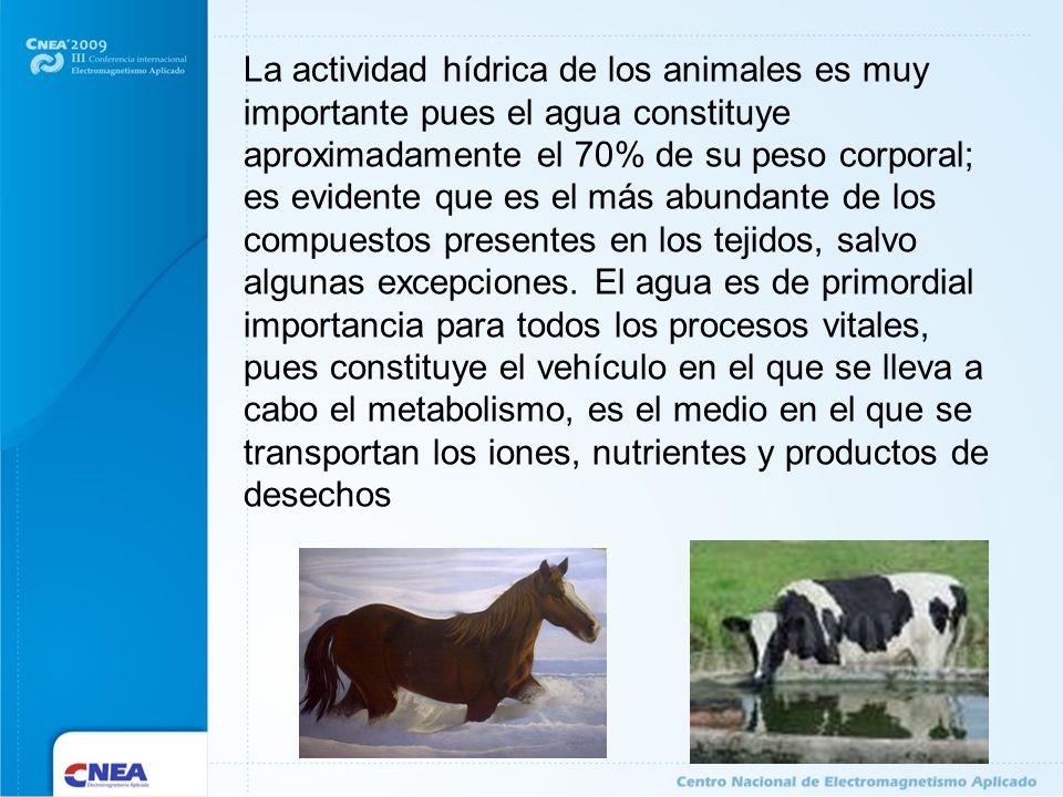 La actividad hídrica de los animales es muy importante pues el agua constituye aproximadamente el 70% de su peso corporal; es evidente que es el más a