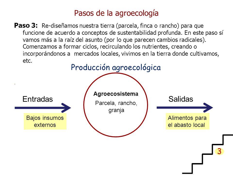 Pasos de la agroecología Paso 3: Re-diseñamos nuestra tierra (parcela, finca o rancho) para que funcione de acuerdo a conceptos de sustentabilidad profunda.